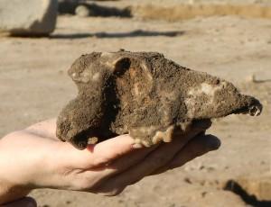 I ett annat grophus hittades en hundskalle. Att vara eller inte vara…