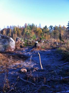 Att gräva i Hälsingland i oktober är en kamp mot klockan, men än så länge har det bara varit morgonfrost och ingen snö. Foto: Kerstin Westrin