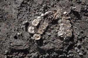 Skeletten var dåligt bevarade, men antal och kroppens orientering kunde ändå utläsas. På fotot syns tandrader från över- och underkäke.