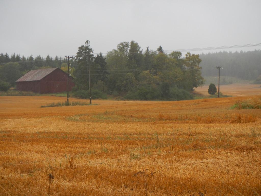 Gravfältet i höstskrud
